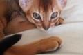 Котята М3